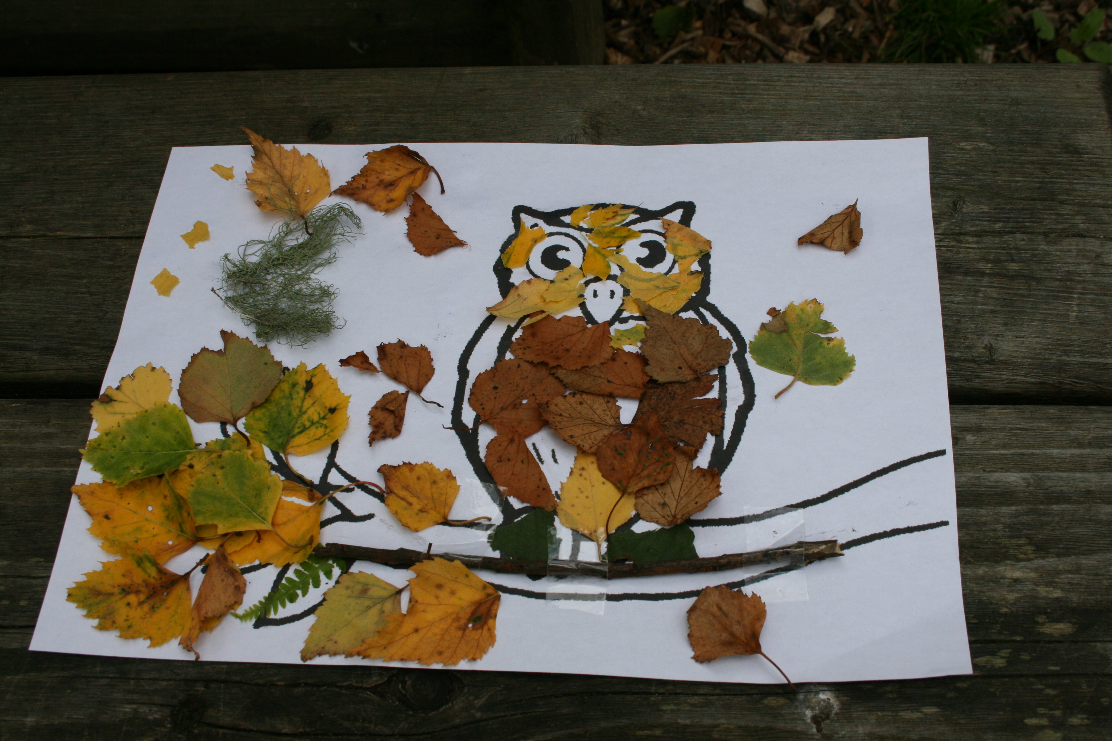 Stirling/Falkirk Outdoor and Woodland Learning (OWL) group