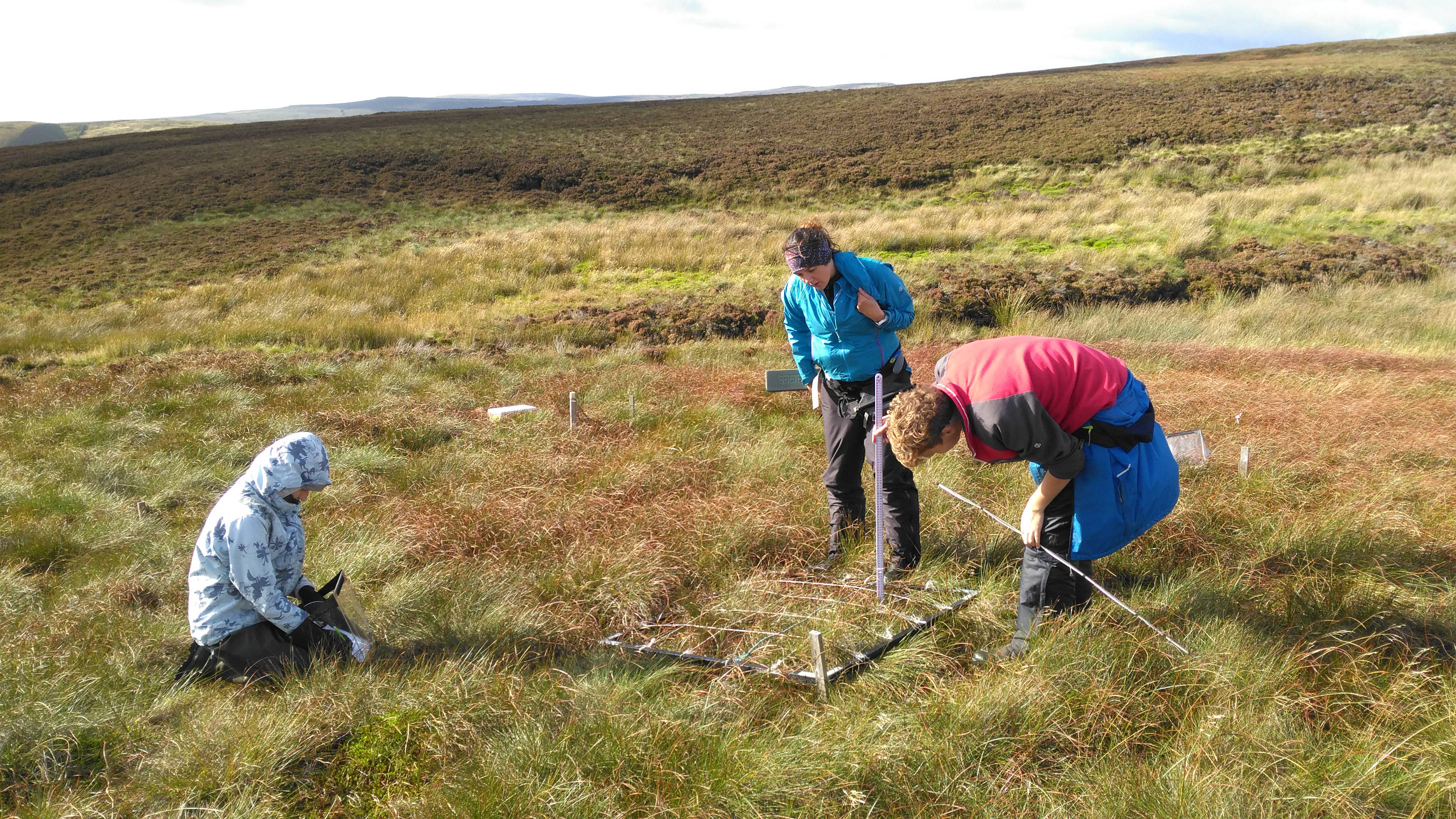 Working with University of York on Defra bog project